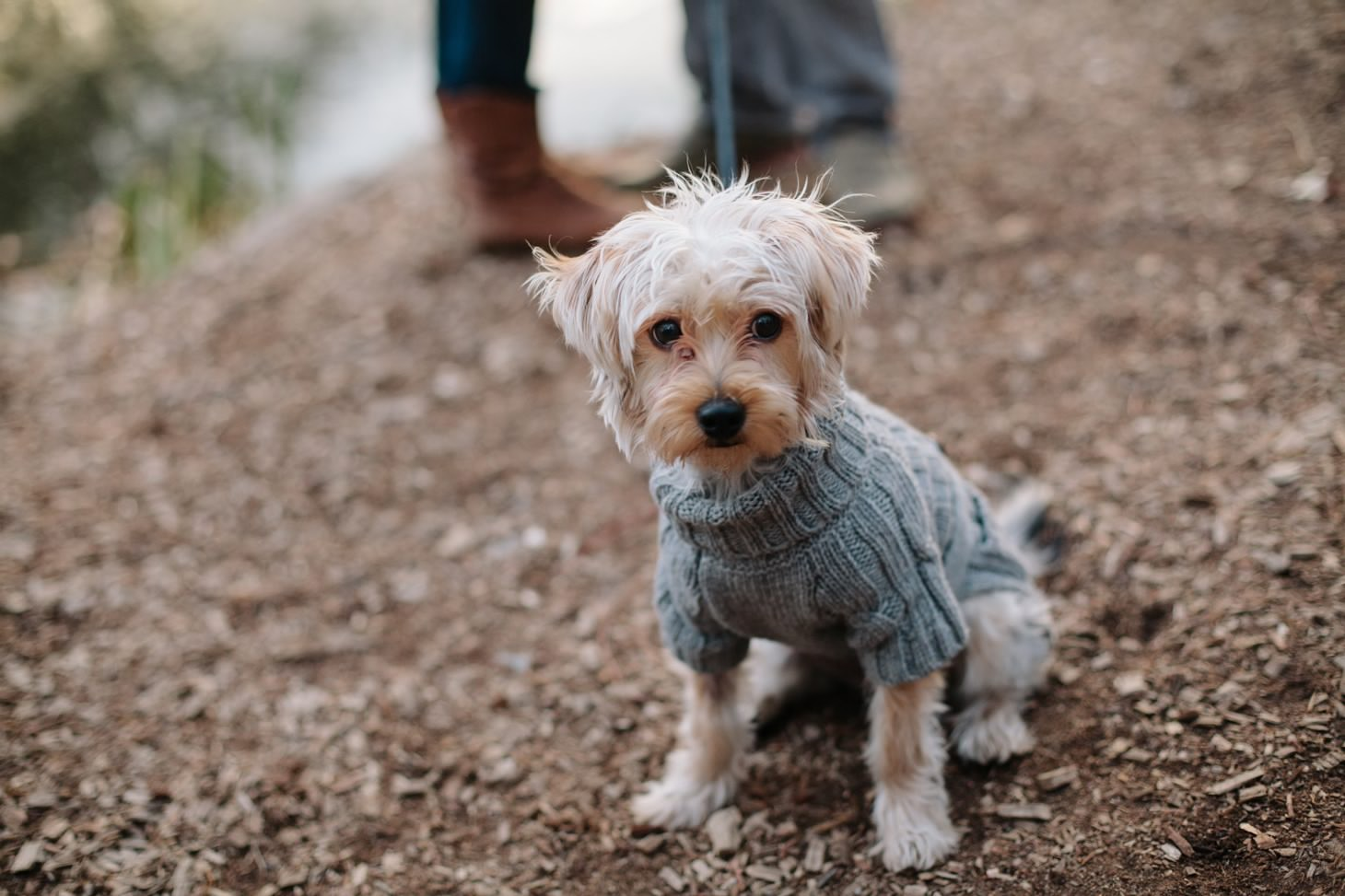 015-nyc-wedding-photographer-puppy-holiday-mini-session-fall-central-park.jpg