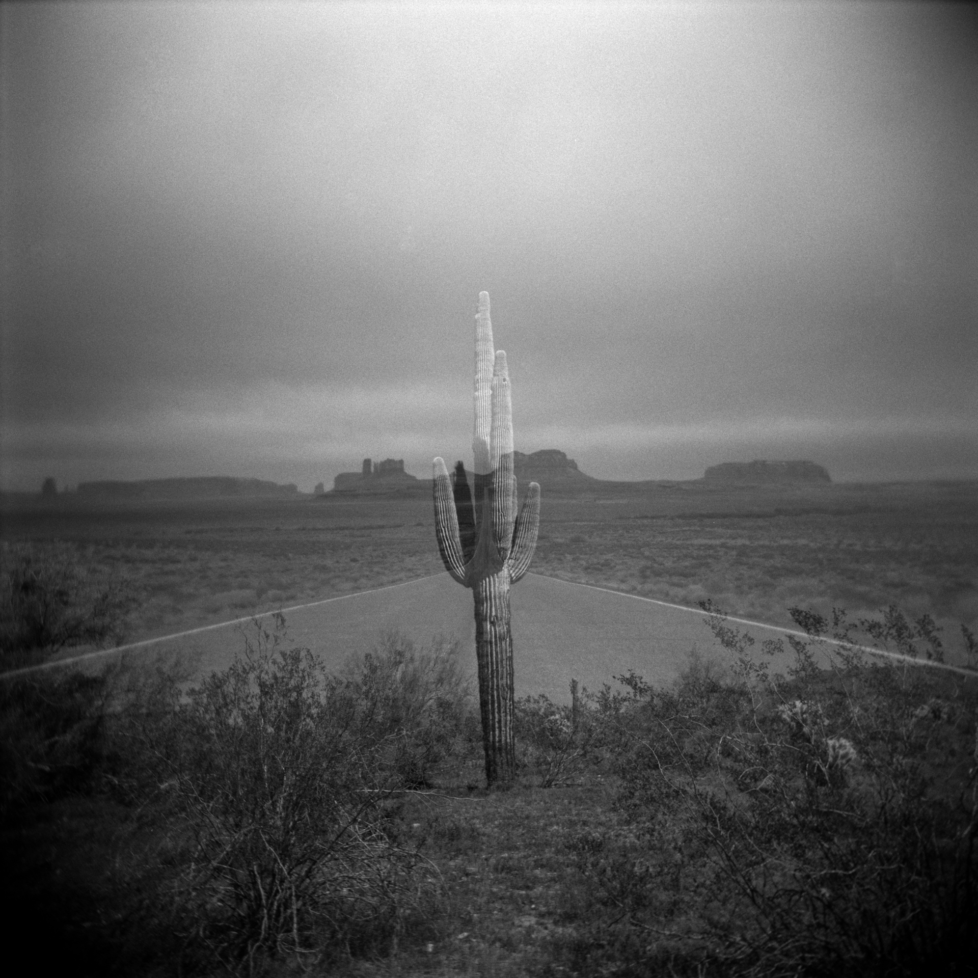 Synovec, Ryan monumental cactus Honorable Mention