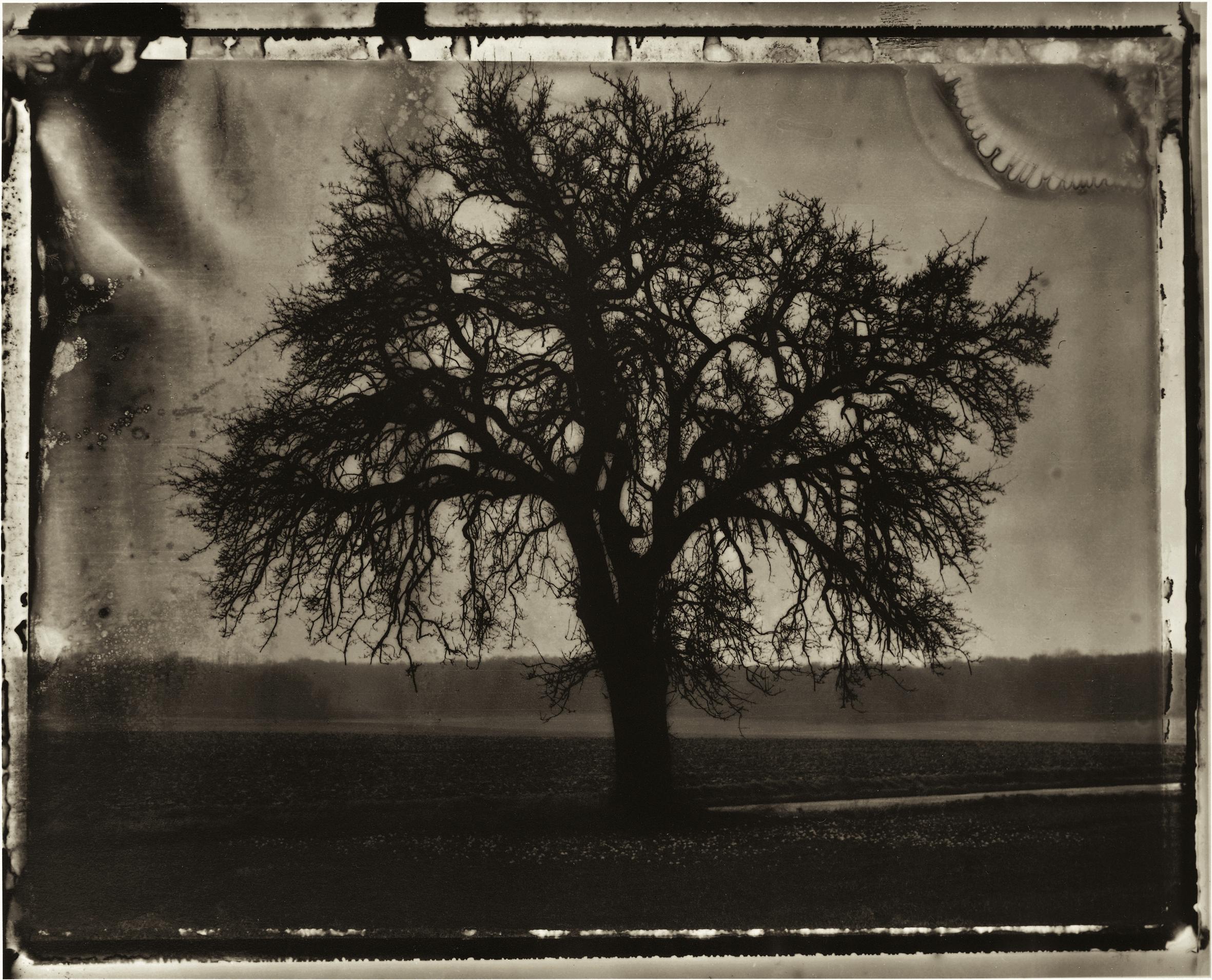 1.Sarah Moon_The Pear Tree_1992