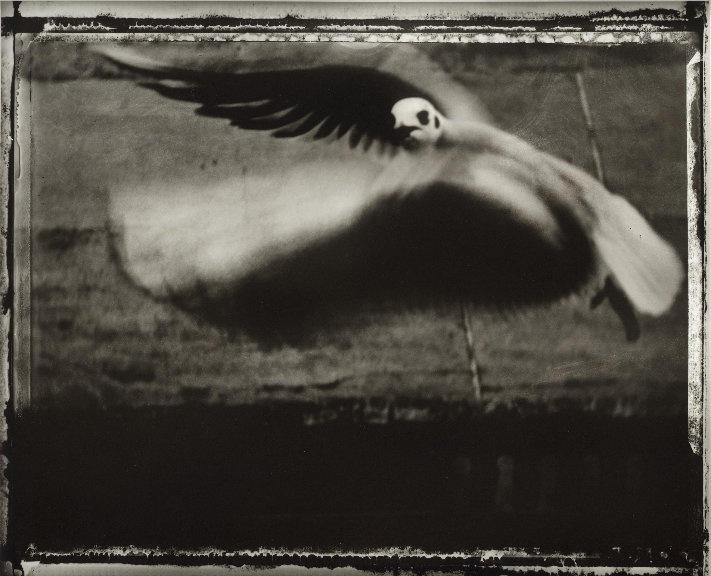 2.Sarah Moon_The Seagull_ 1998