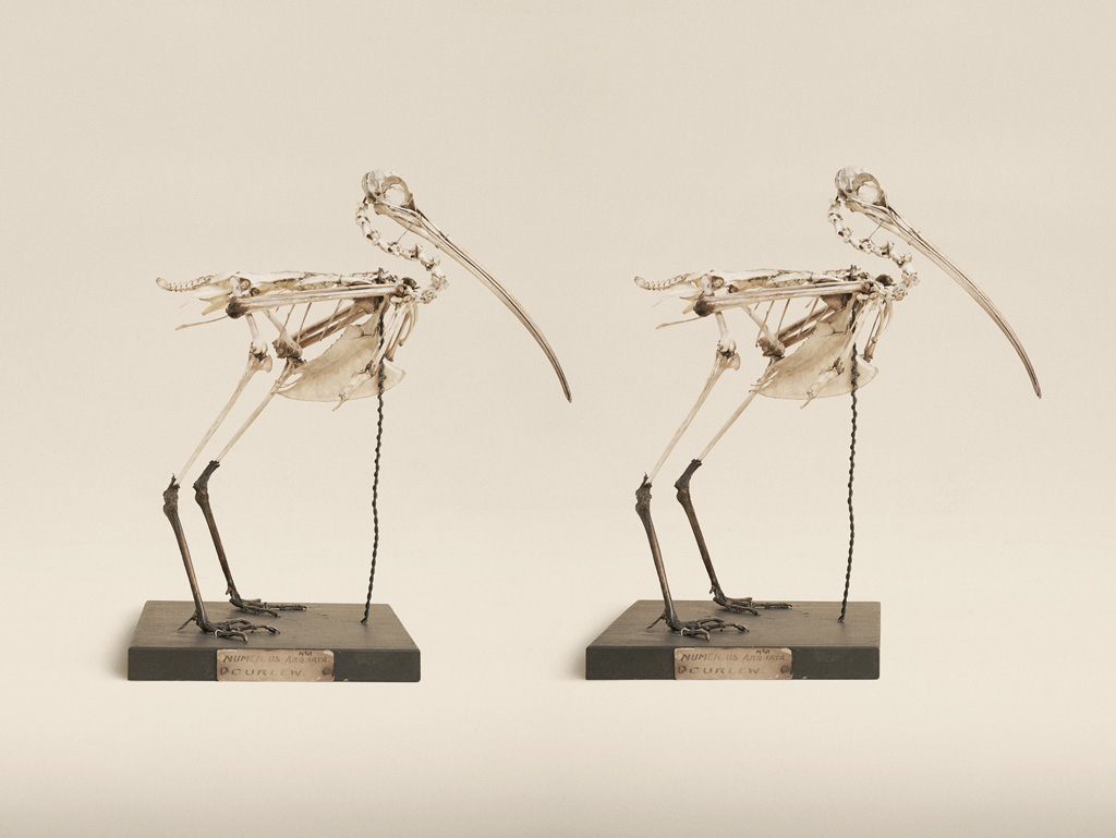 Image above: ©Jim Naughter,Eurasian Curlew, 2015 / Courtesy Klompching Gallery, New York