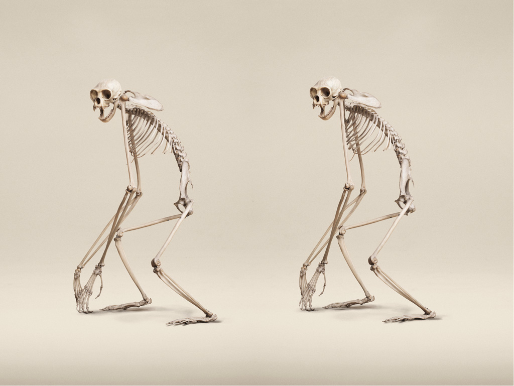 Image above: ©Jim Naughten,White-Handed Gibbon, 2015 / Courtesy of Klompching Gallery, New York