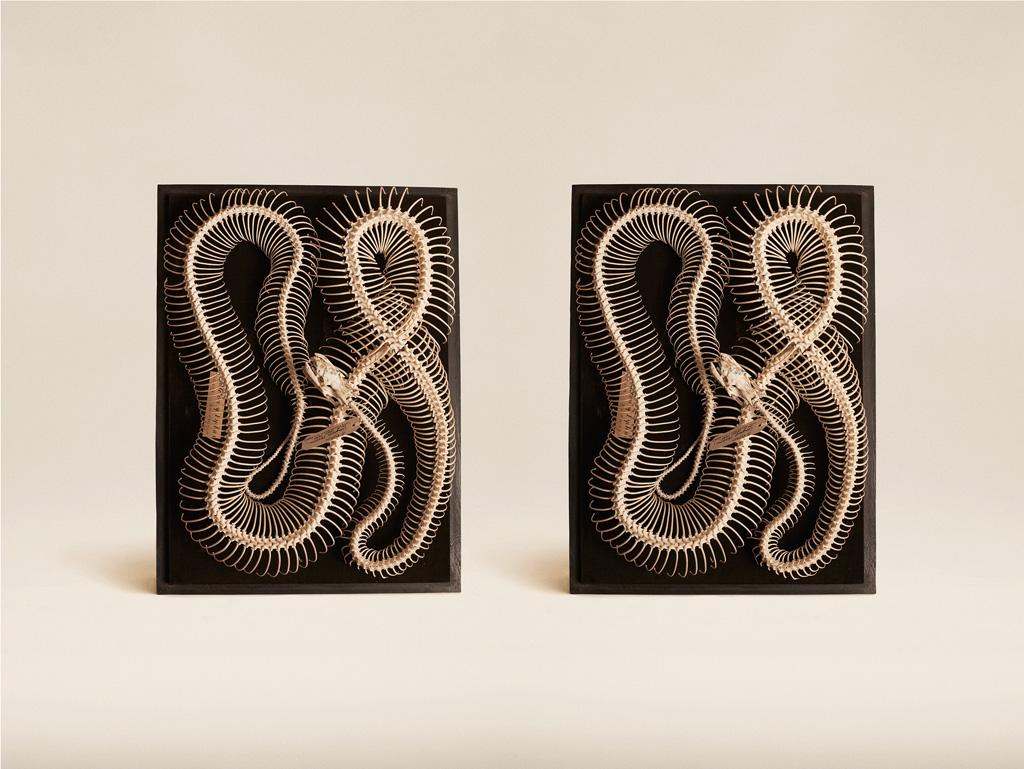Image above: ©Jim Naughten,Diamond Python, 2015 / Courtesy of Klompching Gallery, New York