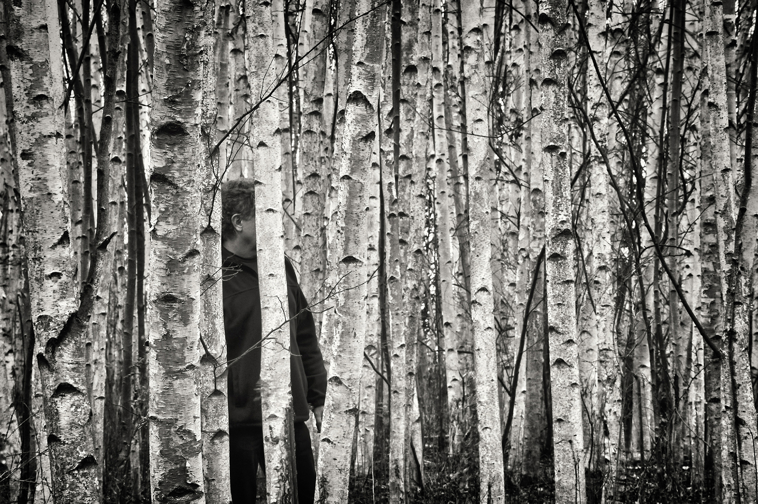 """"""" The Birches"""" , Skaneateles, NY, 2012 © Ted Anderson"""
