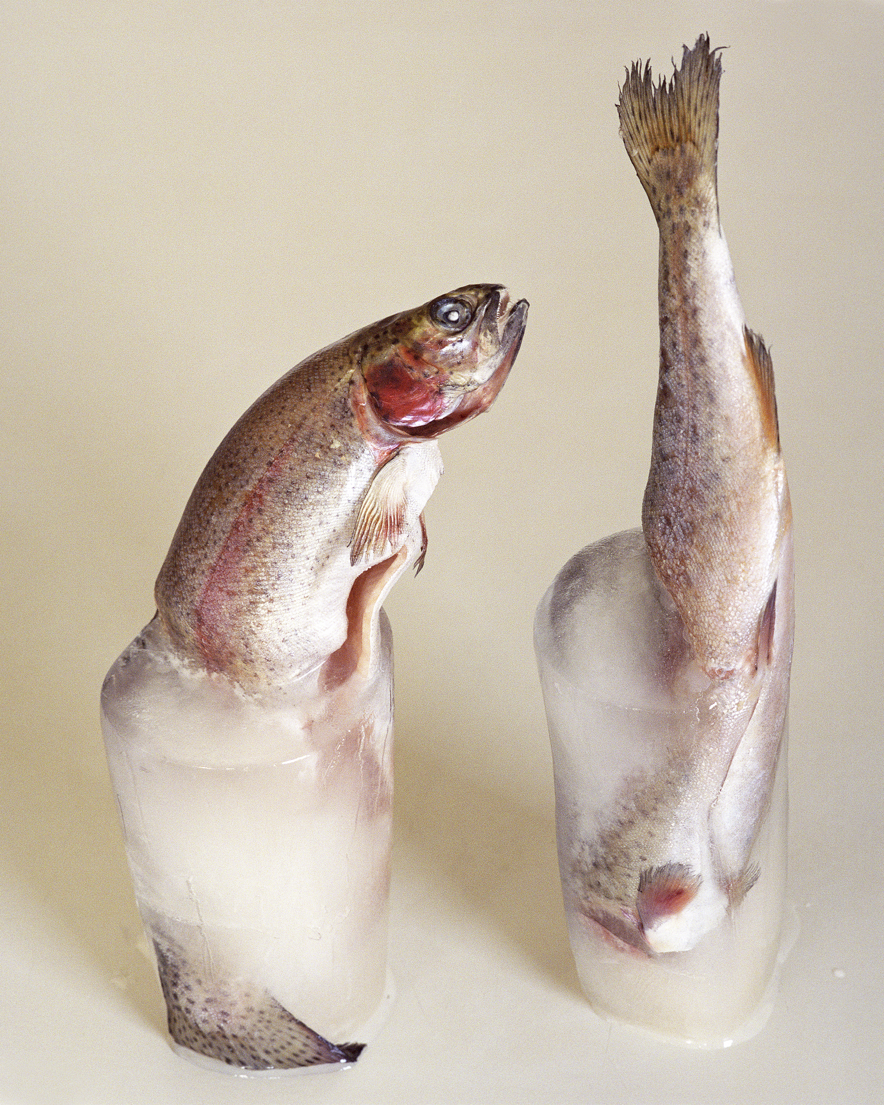 """Birthe Piontek,Trouts,from the Series """"Lying Still,""""2010-2015"""