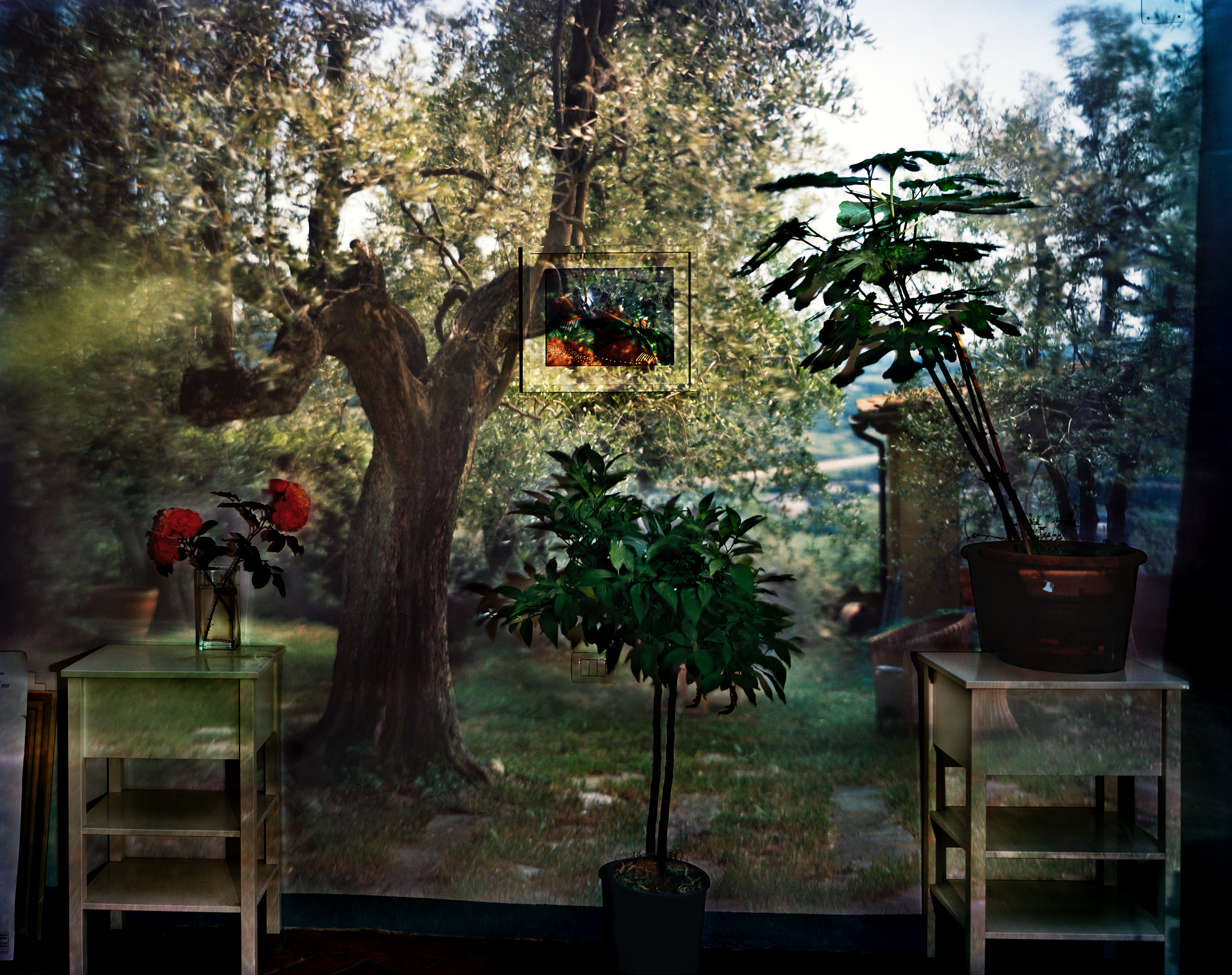 Abelardo Morell, Camera Obscura:  Garden with Olive Tree Inside Room with Plants, Italy,  2009.