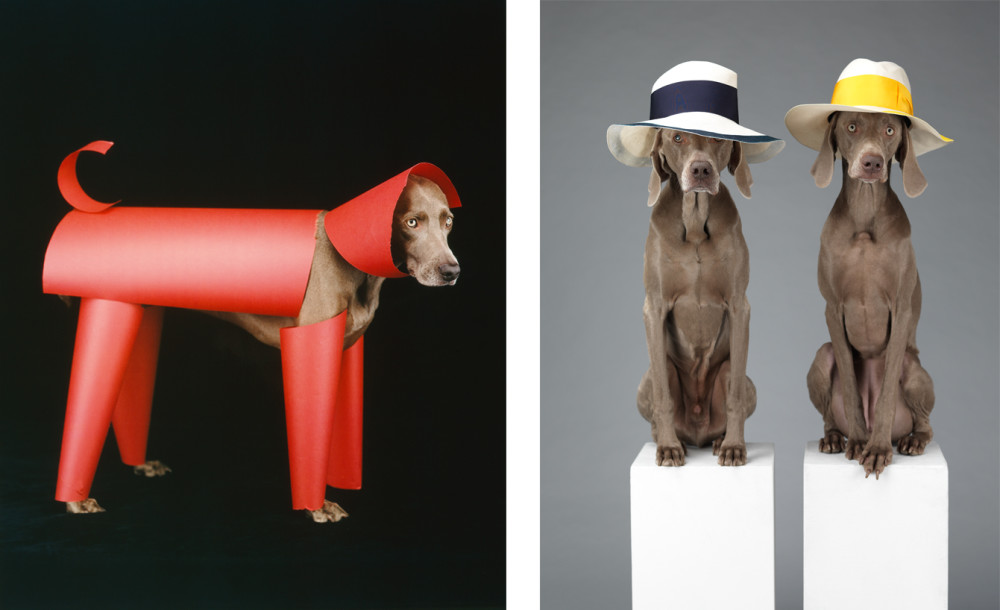 ©William Wegman, (left) Red Toy, 2006; (right)Hat Dogs, 2013. Courtesy of the artists