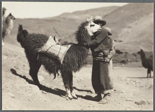 Martín Chambi, Campesino con Llama, Sicuani-Cusco (Peasant with Llama, Sicuani-Cusco), 1938. NYPL, The Miriam and Ira D. Wallach Division of Art, Prints, and Photographs. © Archivo Fotográfico Martín Chambi Cusco – Perú