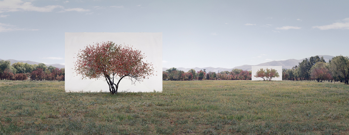 Tree...#7, 2014 From the series Tree Abroad  Archival Inkjet Print