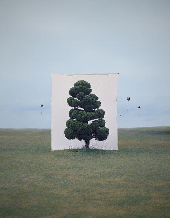 Tree #2, 2006 From the series Tree  Archival Inkjet Print