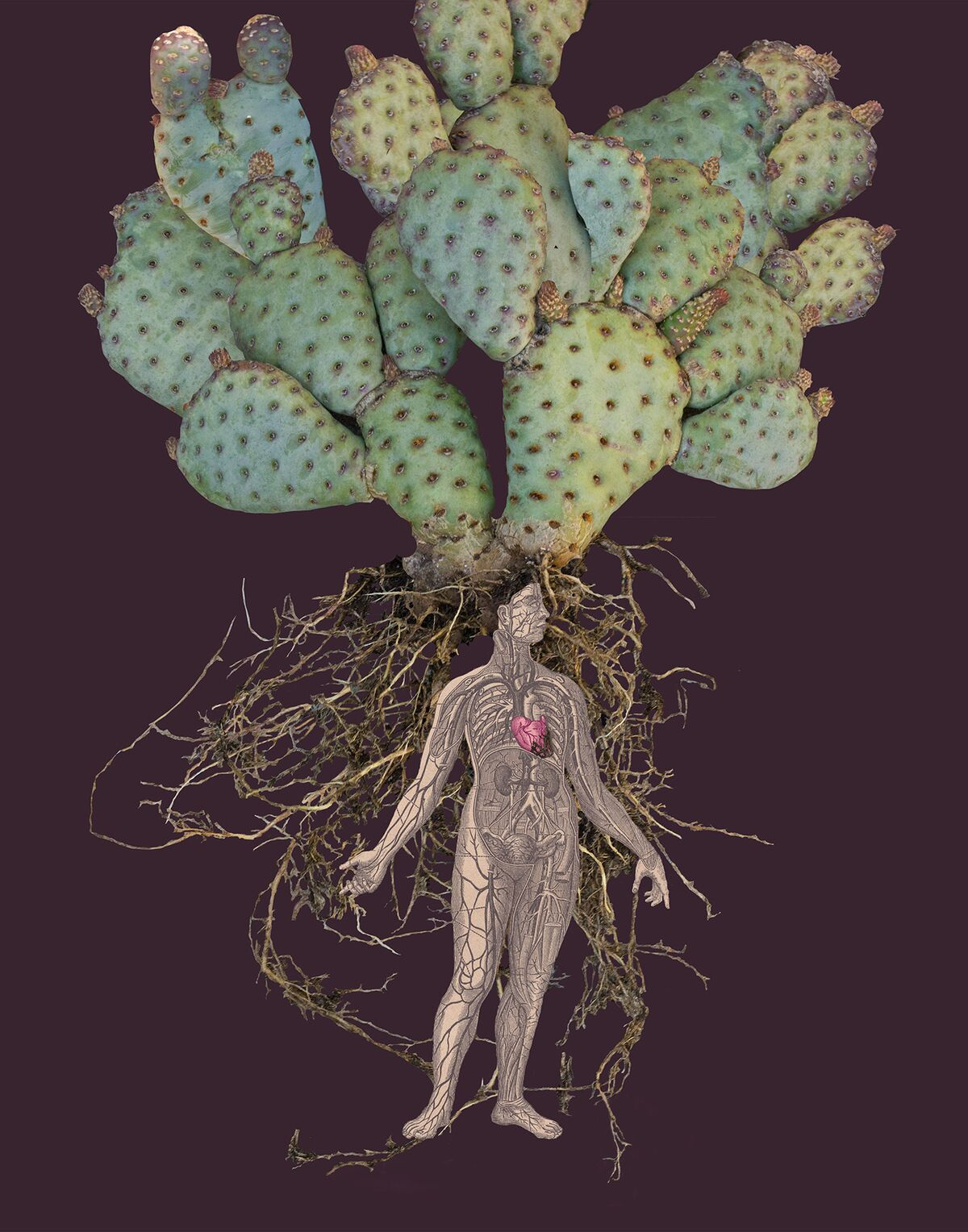 Embittered Heart ,Graceful Opuntia  ©Sandra Klein