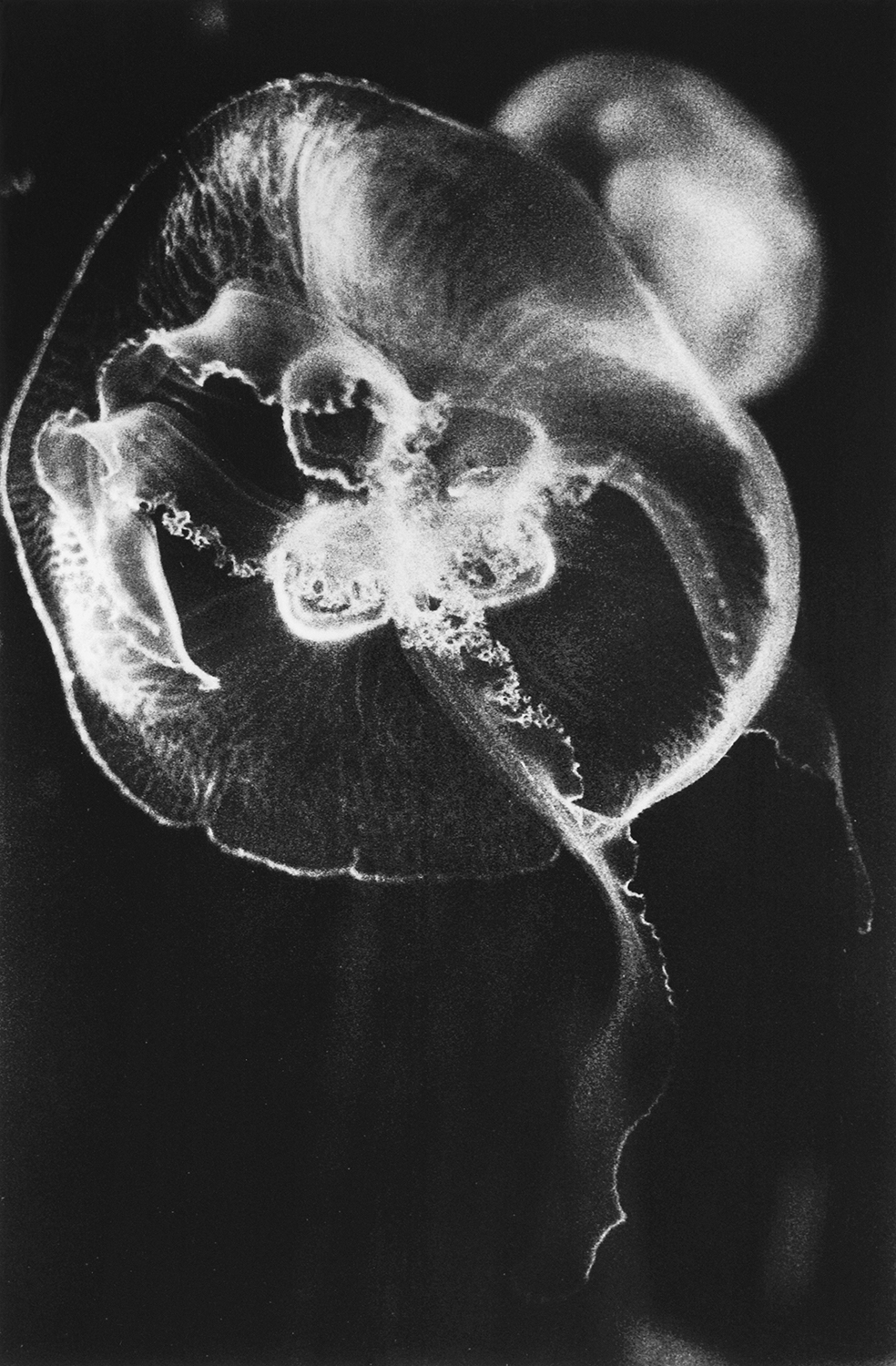Jellyfish  (1991) from  T he Last Cosmology    (2015) by Kikuji Kawada, published by MACK    mackbooks.co.uk
