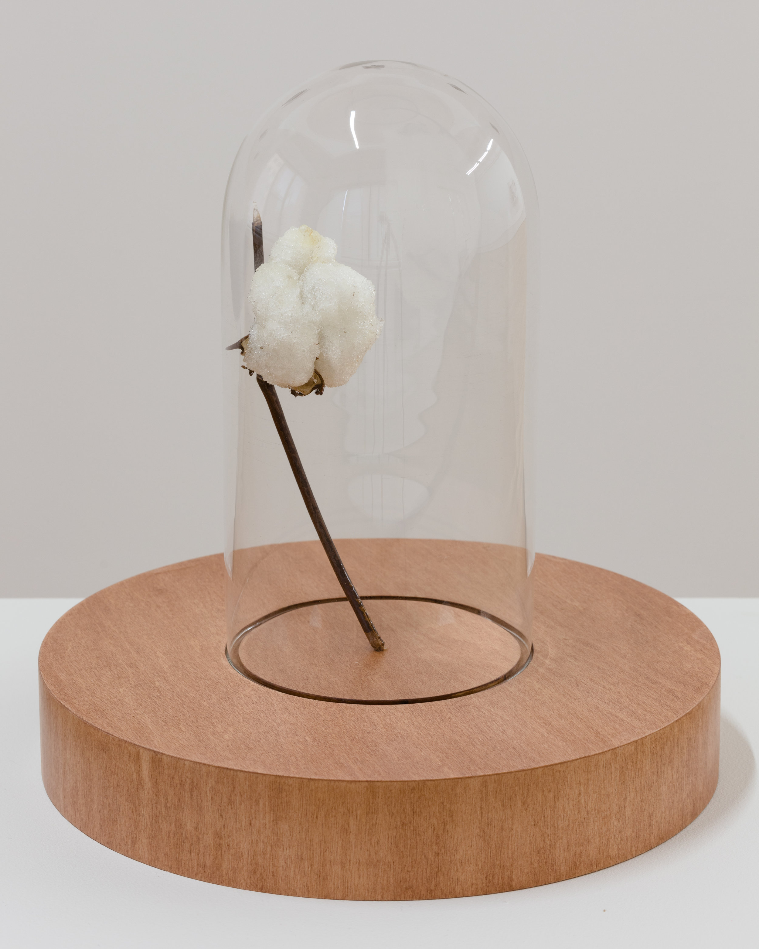 Aria Dean, Dead Zone (2), 2017, Cotton branch, polyurethane, bell jar, wood, signal jammer, 13 1/4 x 12 1/2 in. (33 3/4 x 31 3/4 cm.), Château Shatto, Los Angeles