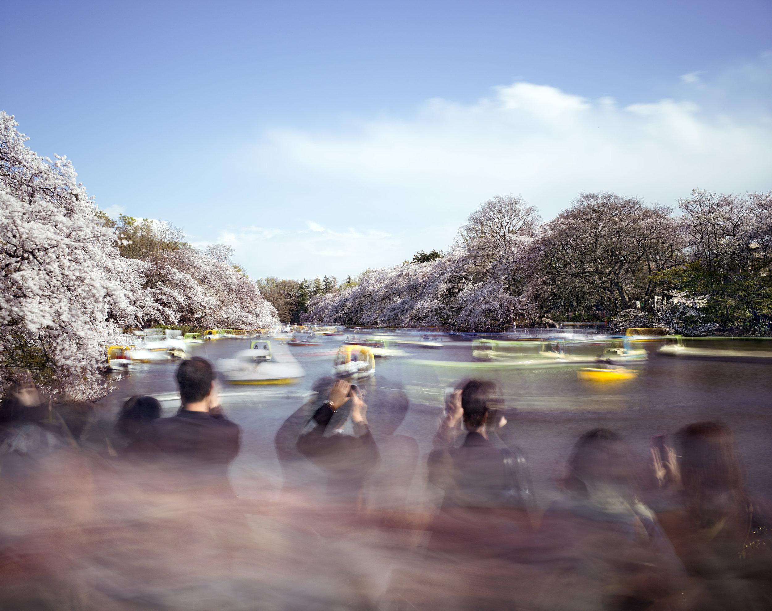 Matthew Pillsbury,  Hanami 14, Inokashira Park , Saturday April 5, 2014.