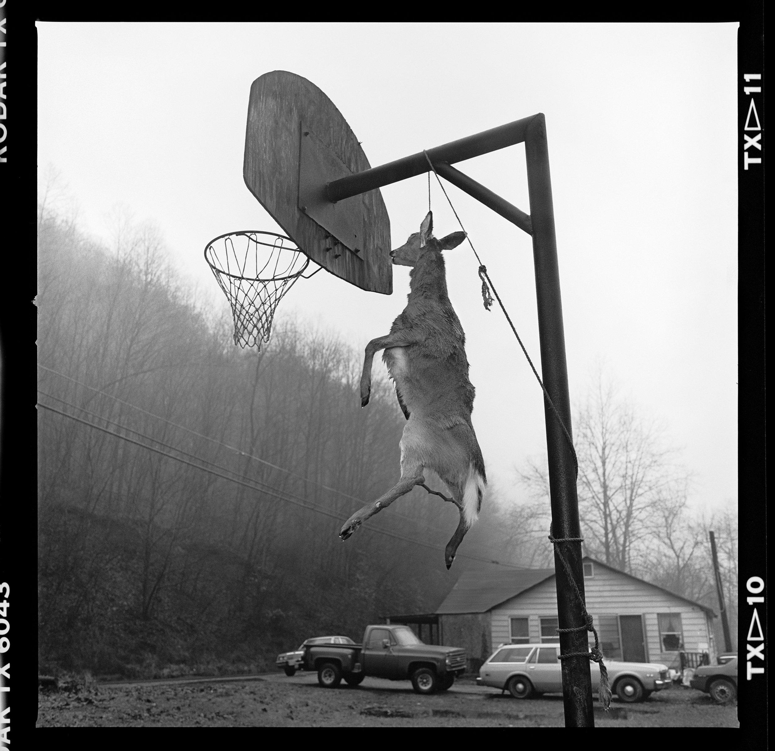 Untitled (Grapevine) 1991 © Susan Lipper