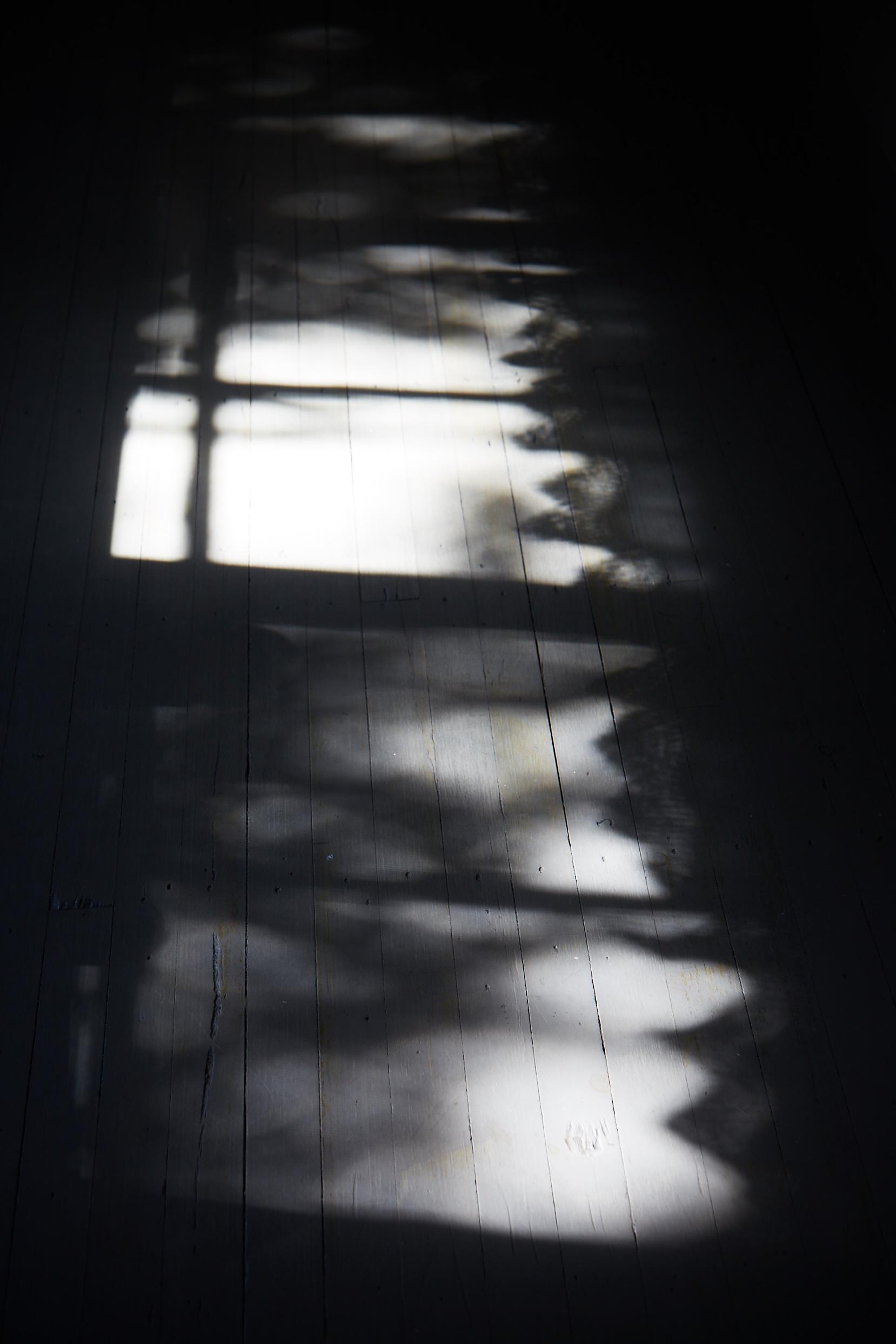 Summer Shadows © Martyn Thompson