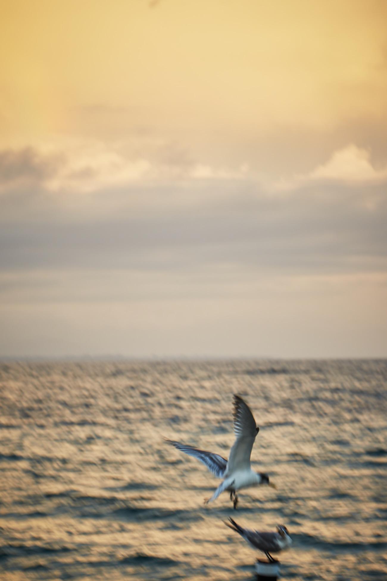 Sunrise © Martyn Thompson