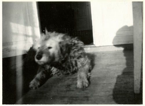 Edvard Munch Munch's Dog 'Fips', 1930 Original: Gelatin silver contact print Courtesy of Munch Museum