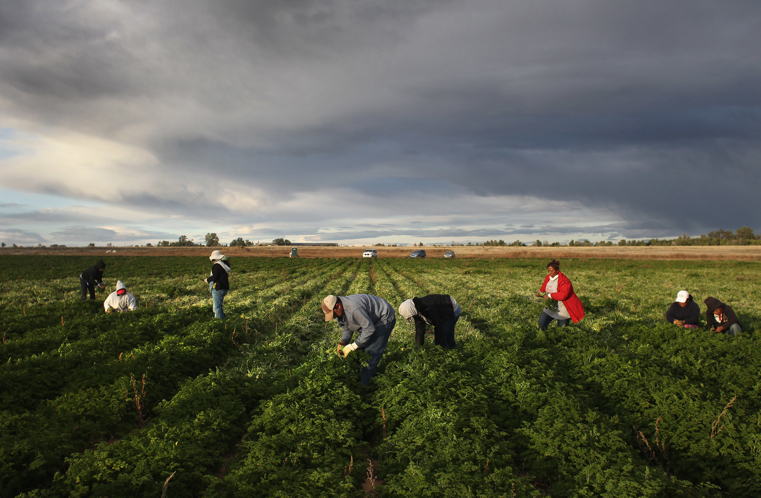 Colorado Farm Suffers As Immigrant Workforce Diminishes Photo by John Moore/Getty Images