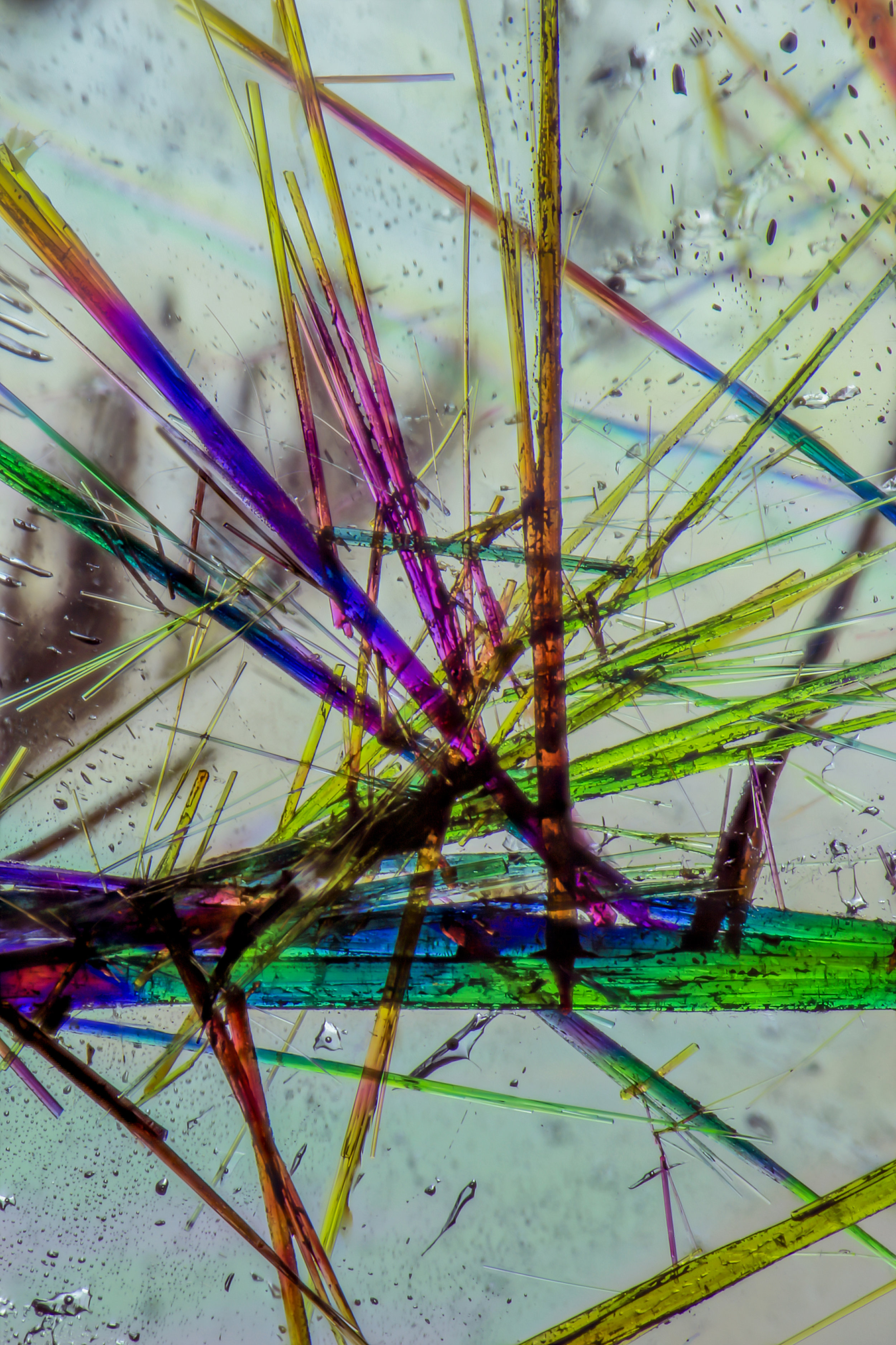 Numerous crystals of the mineral tourmaline are trapped in their rock crystal quartz host. Vibrant birefringent colors are seen using polarized light. The vertical field of view is 4.32mm.© Nathan Renfro