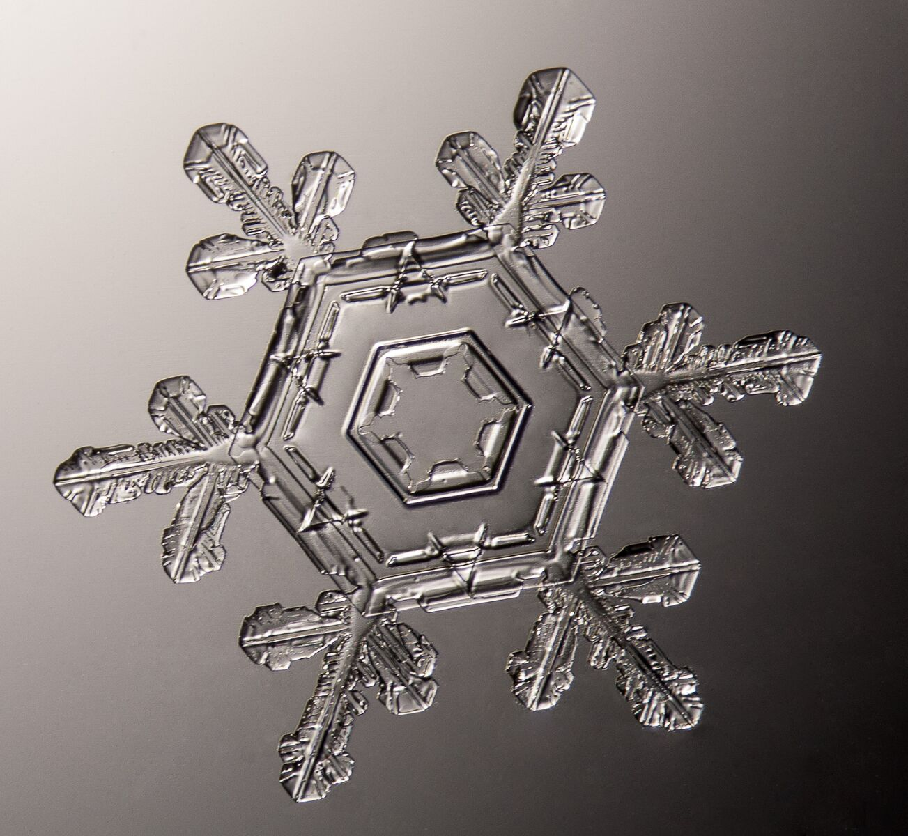 This picture features a stellar plate crystal of a snowflake photographed March 13, 2013. The crystal was approximately 2mm. All snowflakes are different in appearance for many reasons. This crystal has not fully developed the dendritic wings that are often expected in snowflakes.© Michael Peres