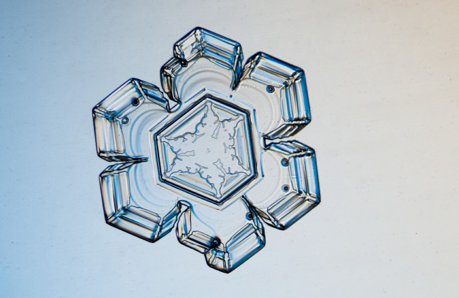 This picture features a stellar plate crystal of a snowflake photographed December 14, 2013. The crystal was approximately 2mm.© Michael Peres