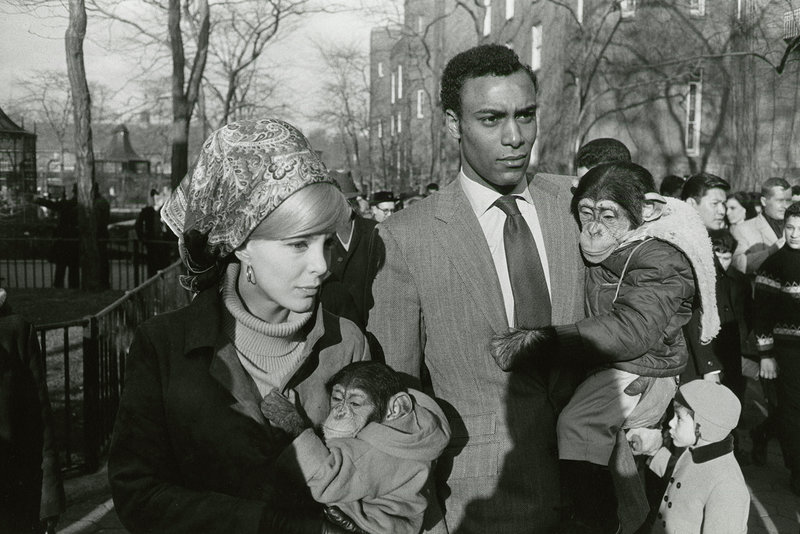 GARRY WINOGRAND Central Park Zoo, New York, 1967 gelatin silver print image, 8 3/4 x 13 inches © The Estate of Garry Winogrand