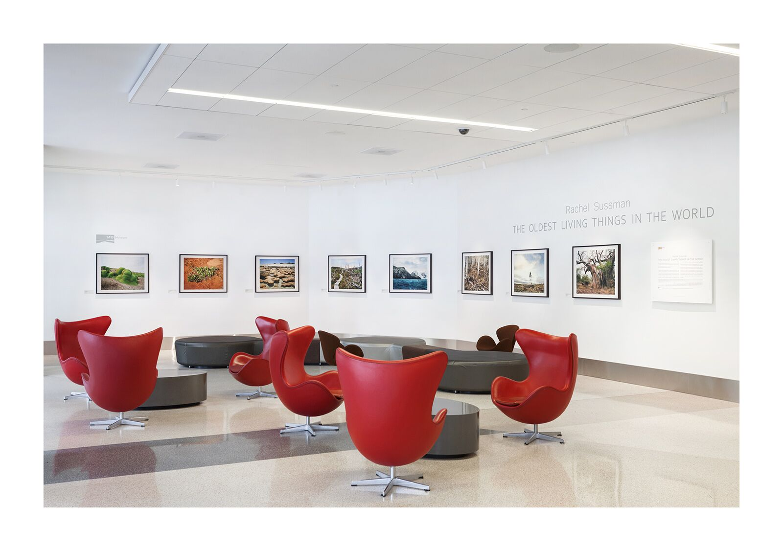 Photos displayed are from Rachel Sussman's  The Oldest Living Things in the World,  as displayed in SFO Terminal 3 from April 19 - July 12, 2018. Courtesy of SFO Museum.