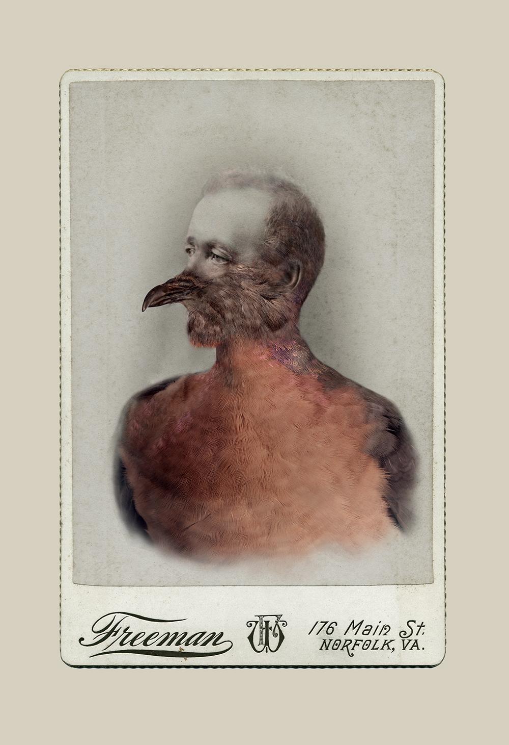 Aviary ©Sara Angelucci   Male Passenger Pigeon/extinct , 2013 C-print, 26 x 38 inches
