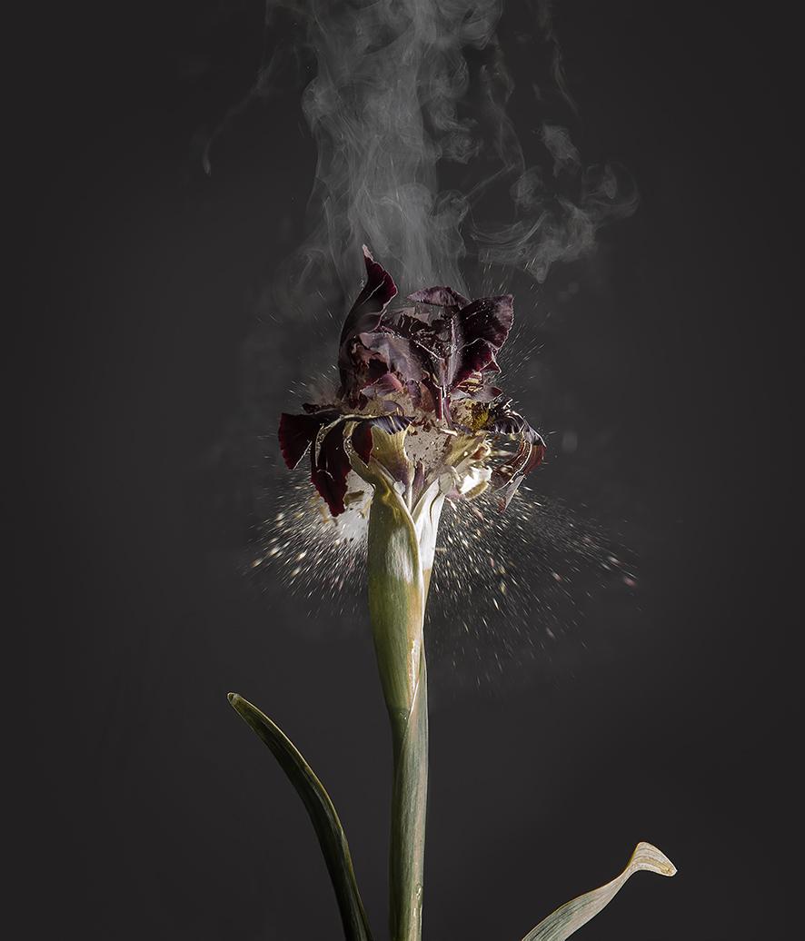 """Iris Atropurpurea D 01"", 2018  Copyright Ori Gersht. Courtesy of the artist and Yancey Richardson."