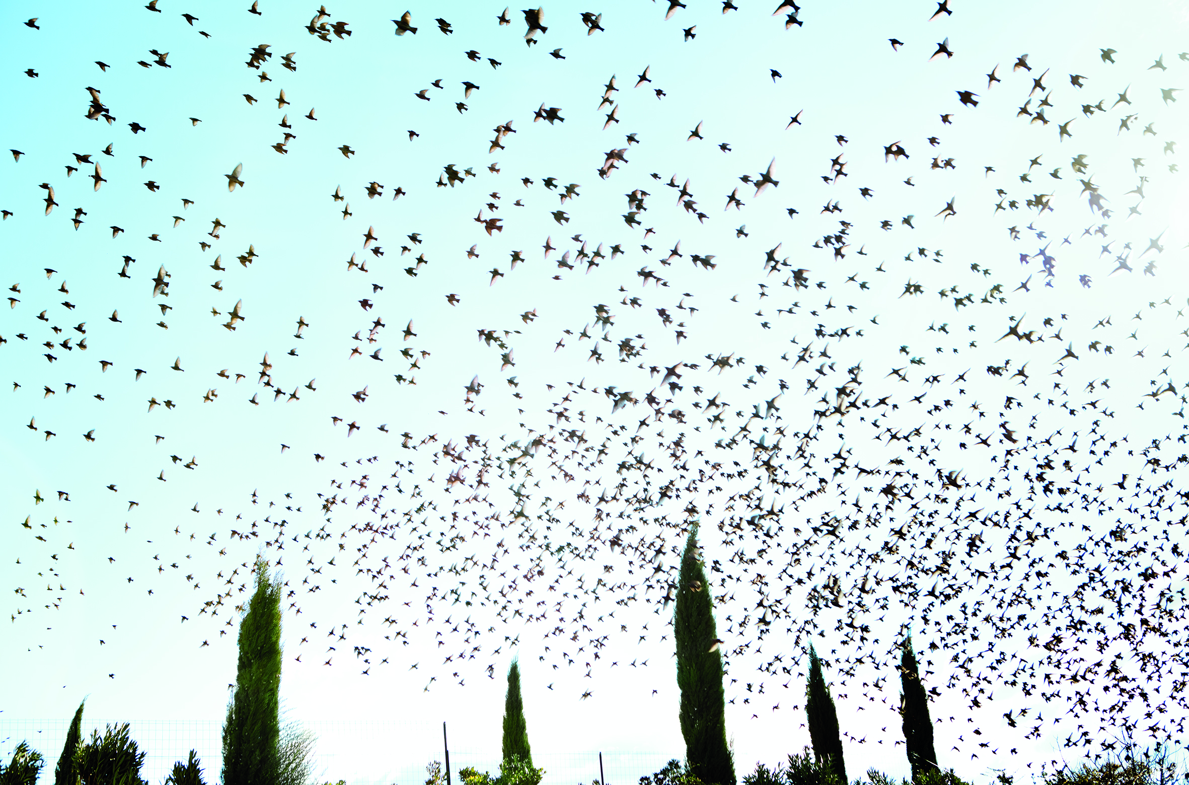 Devino-vent  is a Provencal word that means a wind diviner. These forecasters were dead birds, usually martins, that had been dried and hung on strings in the kitchens of farmhouses. © Rachel Cobb. Courtesy of Damiani.