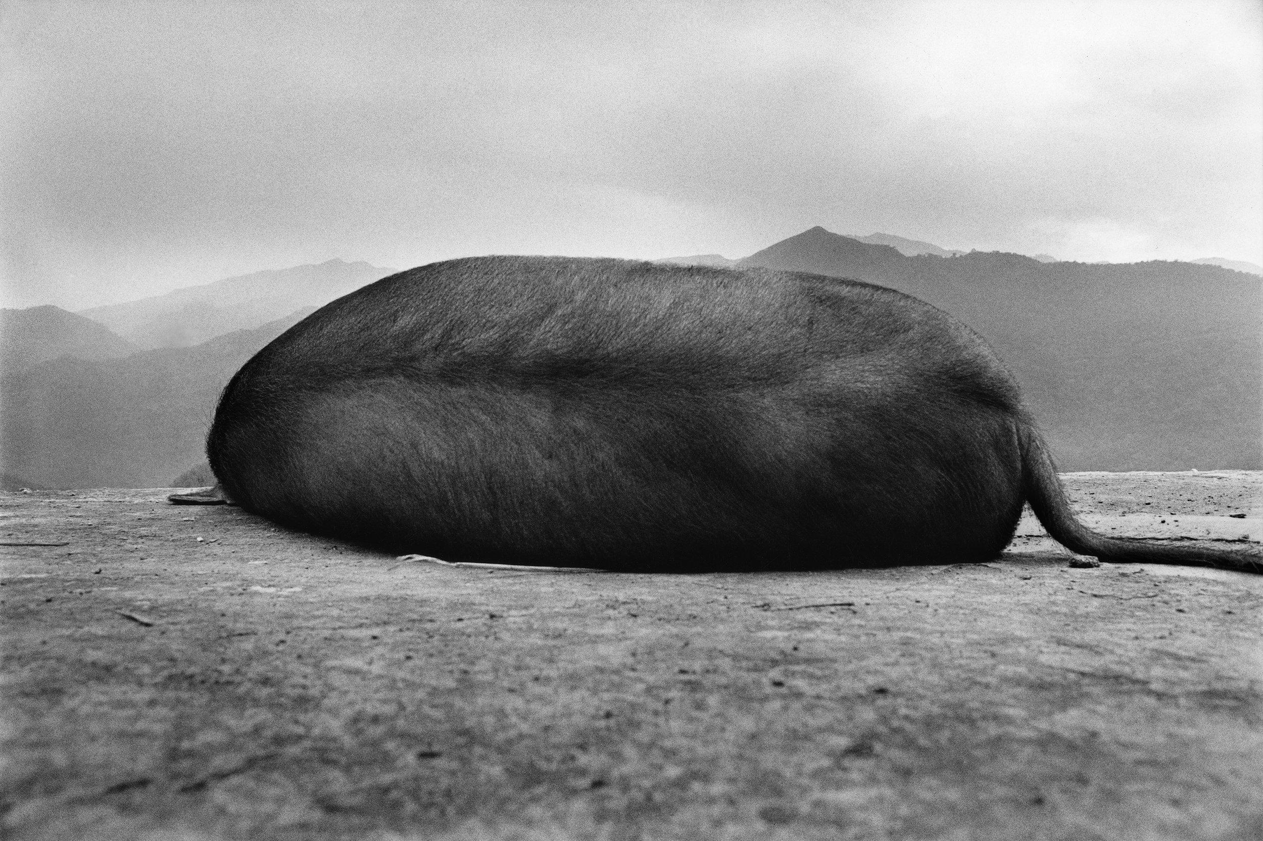 © Chang Chao-Tang - Wufeng Township, Sinchu, Taiwan, 1986
