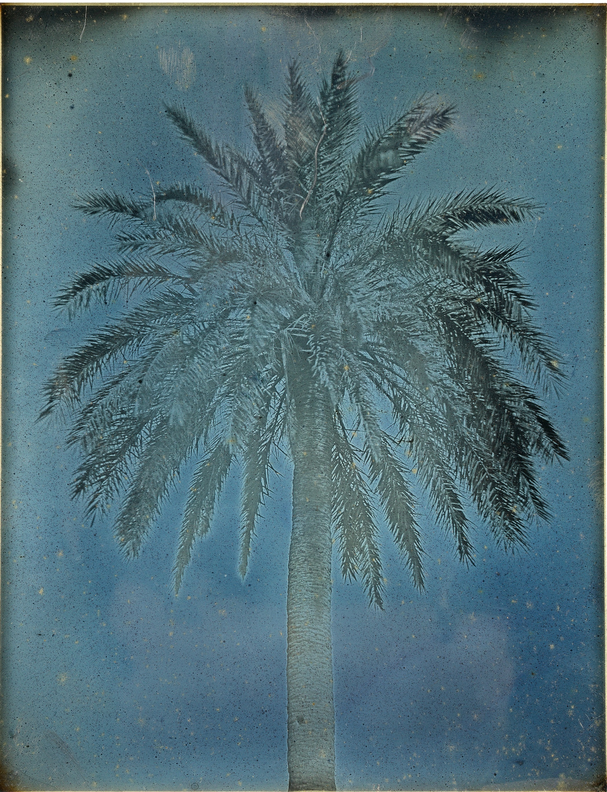 "Girault de Prangey, ""Palm Tree near the Church of Saints Theodore, Athens, 1842"""