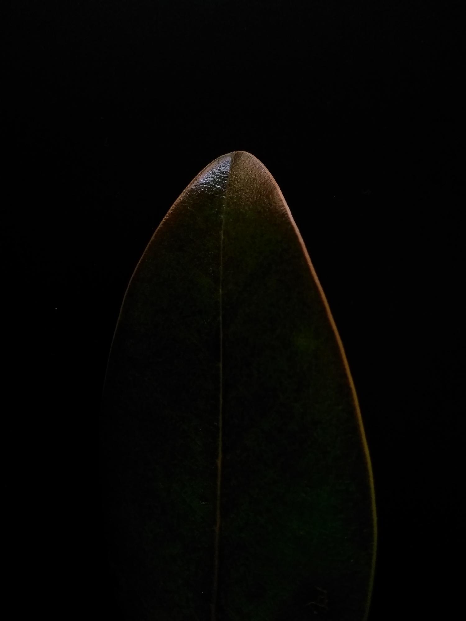 3.leaves.jpg
