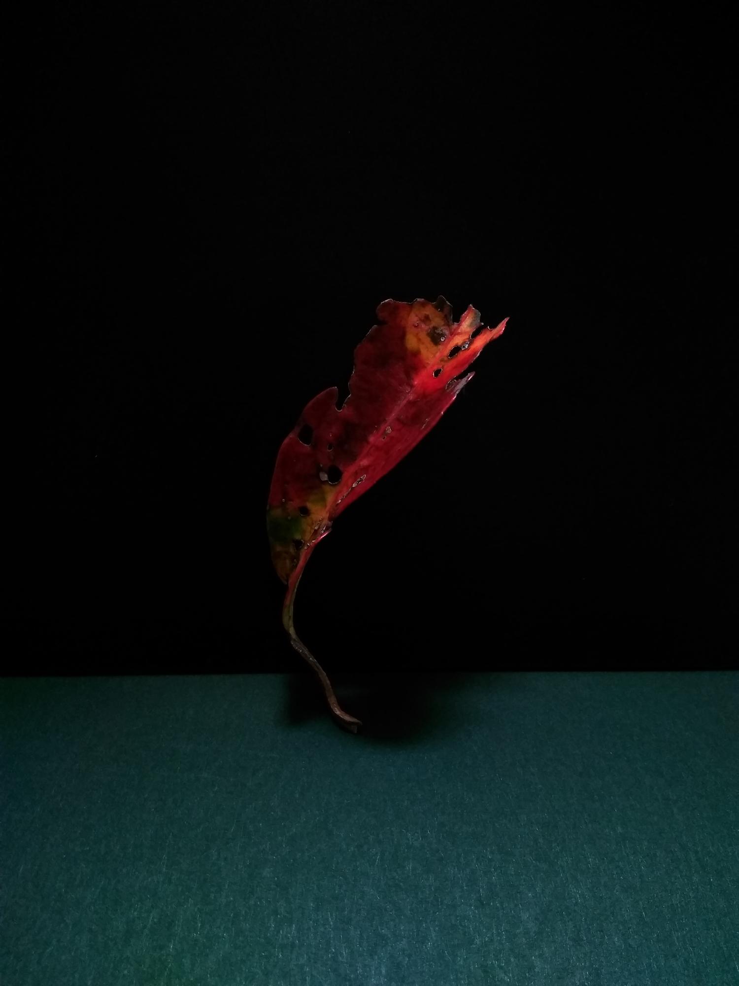 6.leaves.jpg