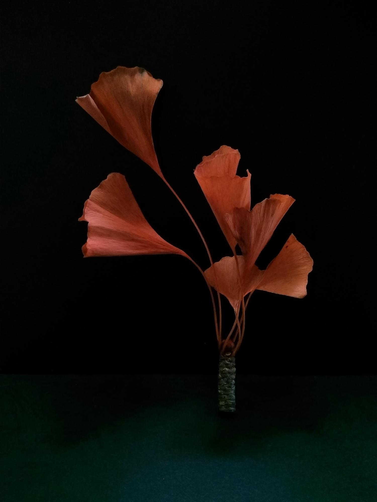 8.leaves.jpg