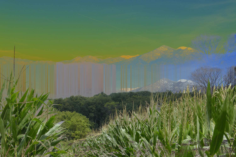 TaosMaize2.jpg