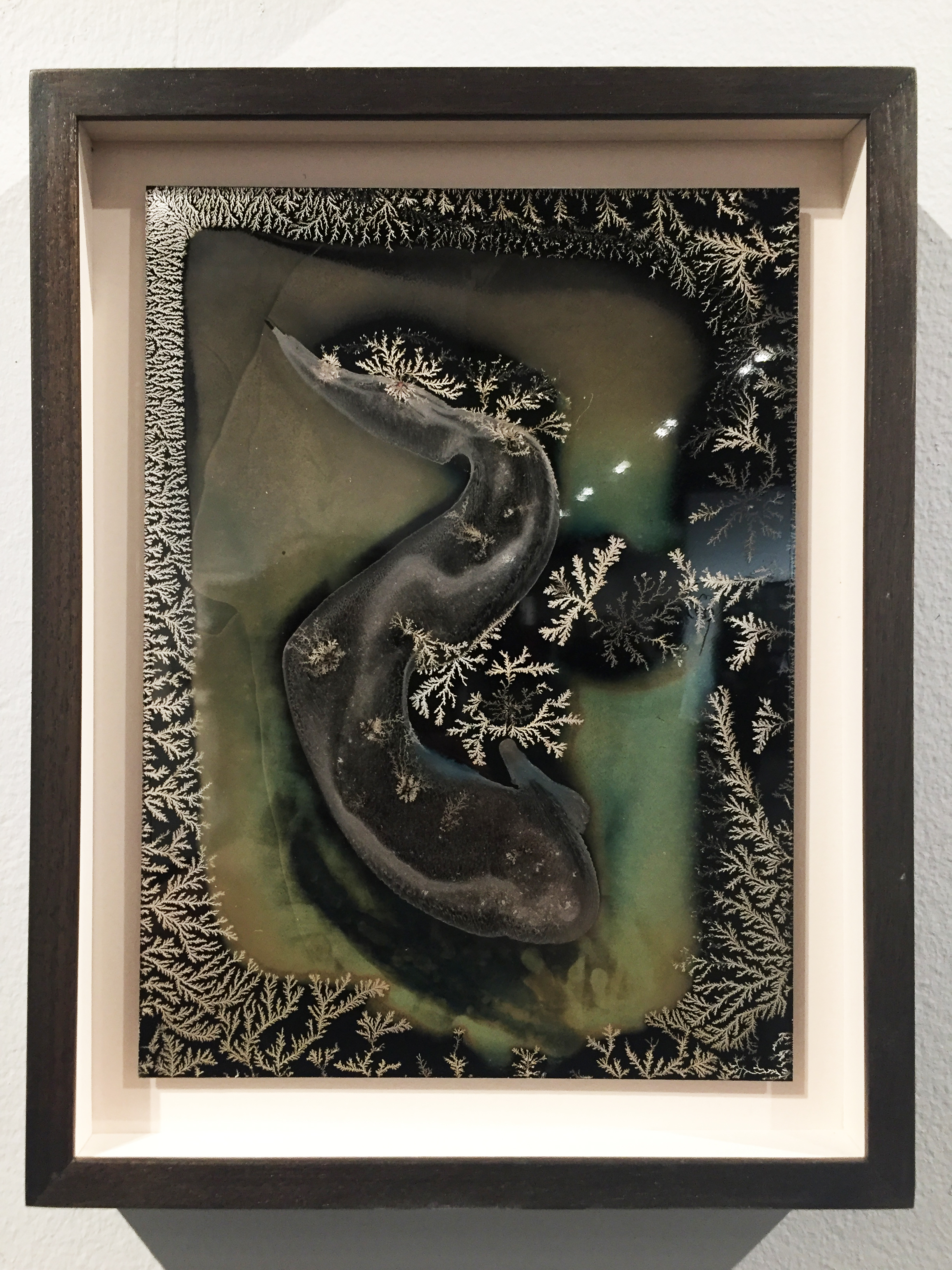 "© Michael Koerner, Rōji #7756, 2018. 8 x 6"" collodion on tin. Unique."