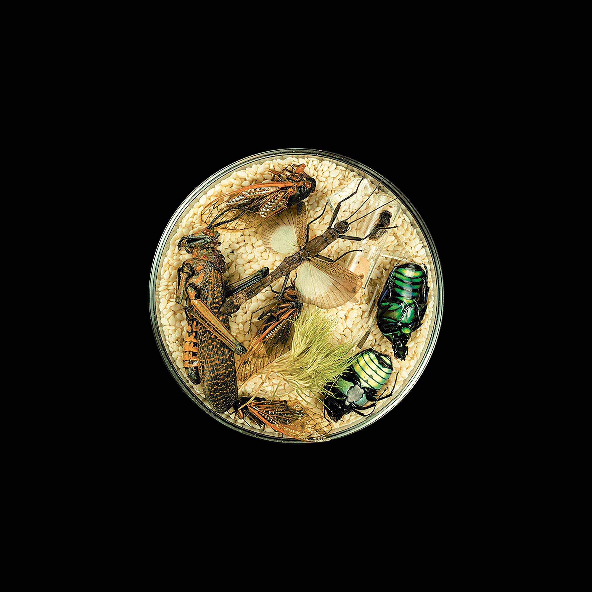 Suzanne Anker, Vanitas (in a Petri Dish) 29, 2013; from  Seeing Science  (Aperture and University of Maryland, Baltimore County, 2019)