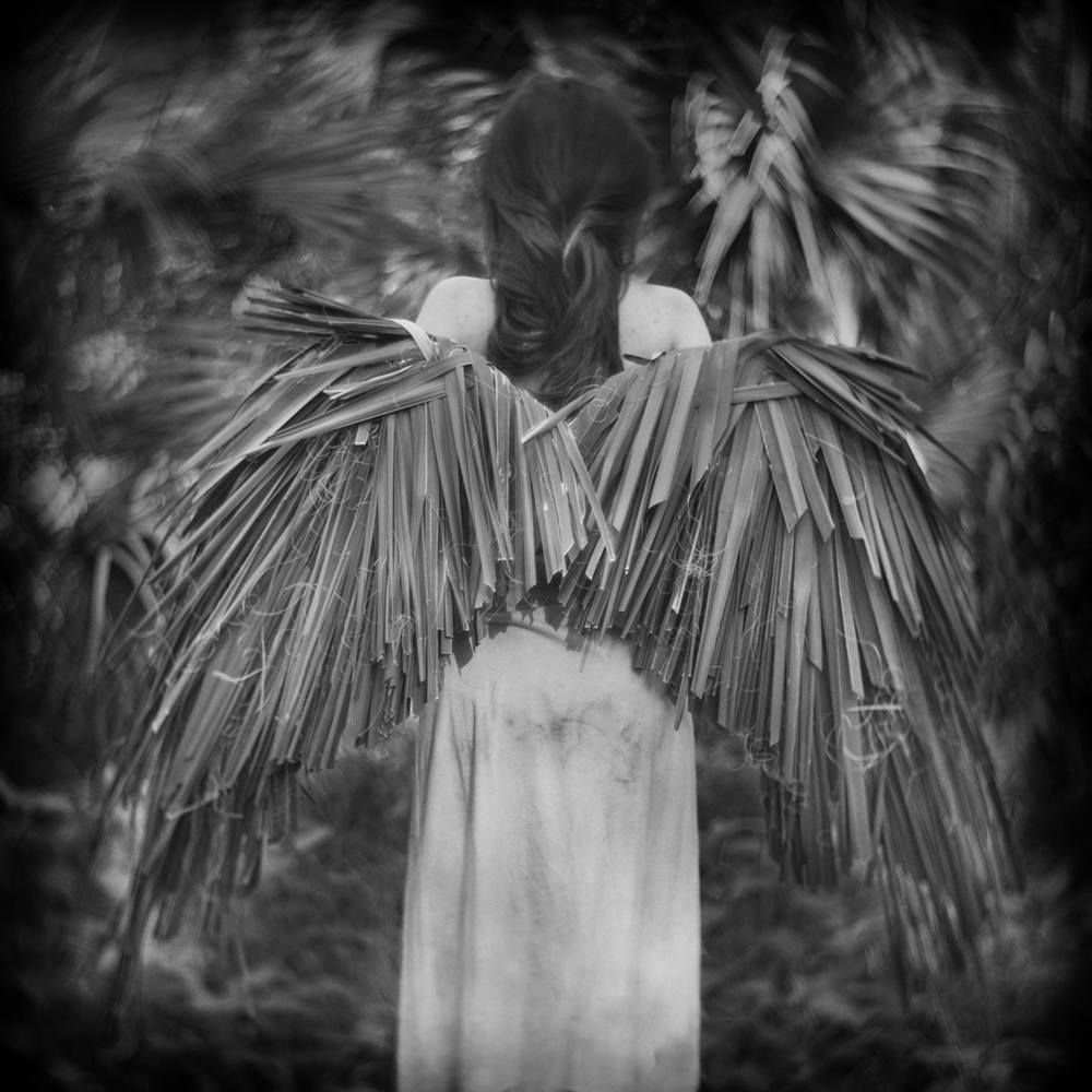 Palm Wings, Ossabaw Island, 2017 © Anne Berry