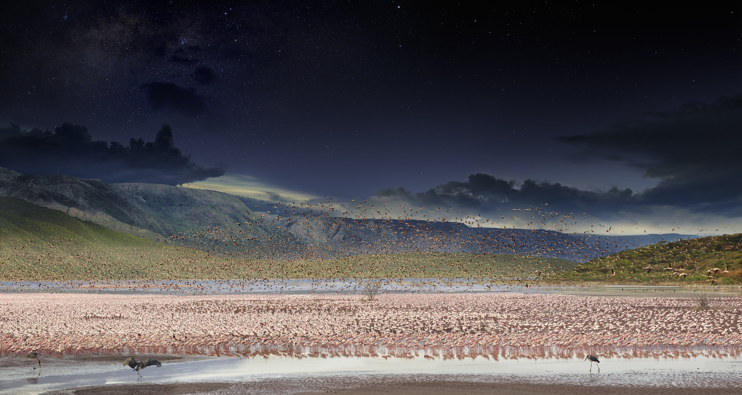 Lesser Flamingos, Lake Bogoria, Kenya, Africa, Day to Night™, 2017