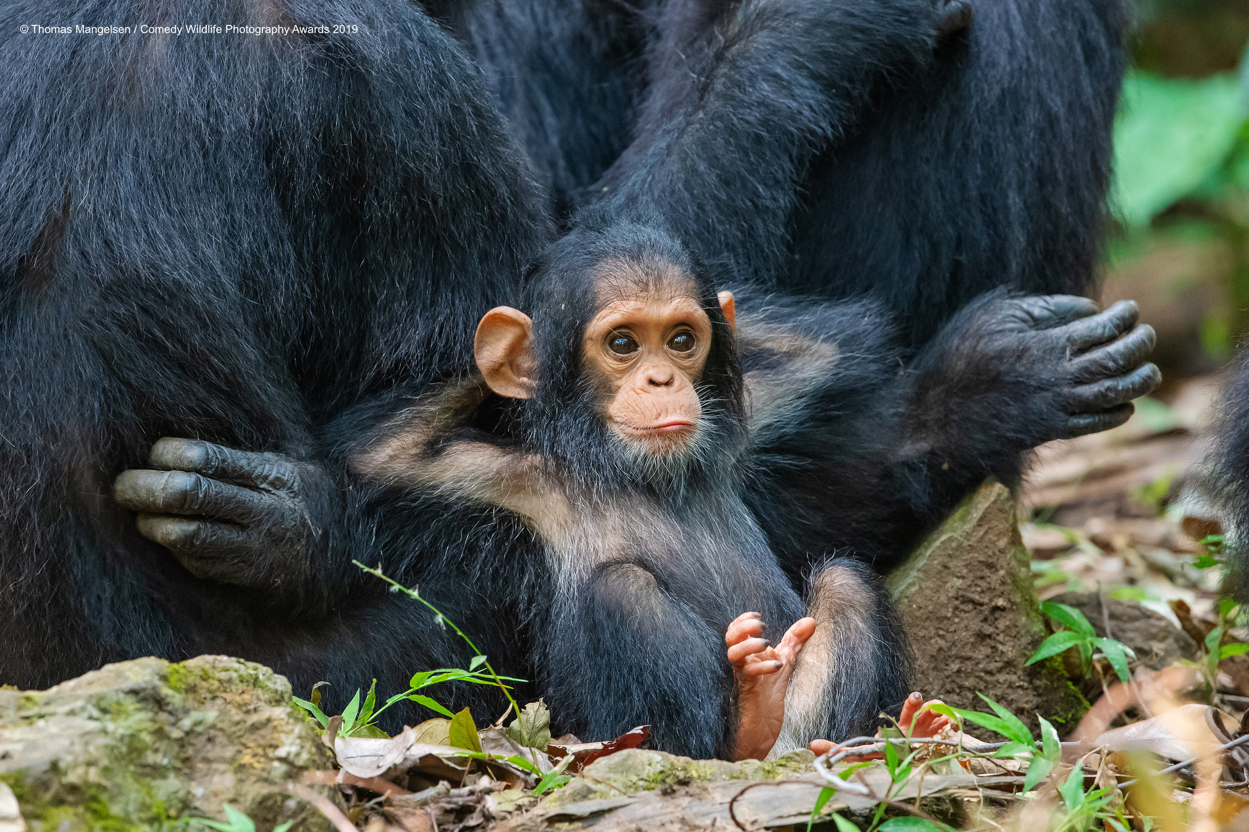 'Laid Back' by Thomas Mangelsen ©. Courtesy of Comedy Wildlife Photography Awards.