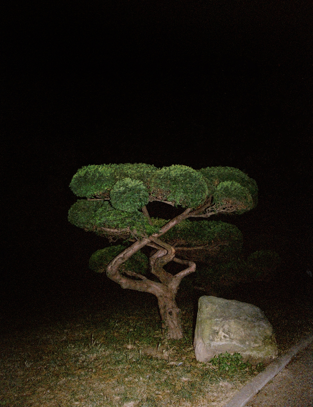 Lili Jamail  Bonsai Full, 2018 inkjet print 13 x 10 in; 33 x 25 cm edition of 5 Courtesy of Lili Jamail and team (gallery, inc.), New York.