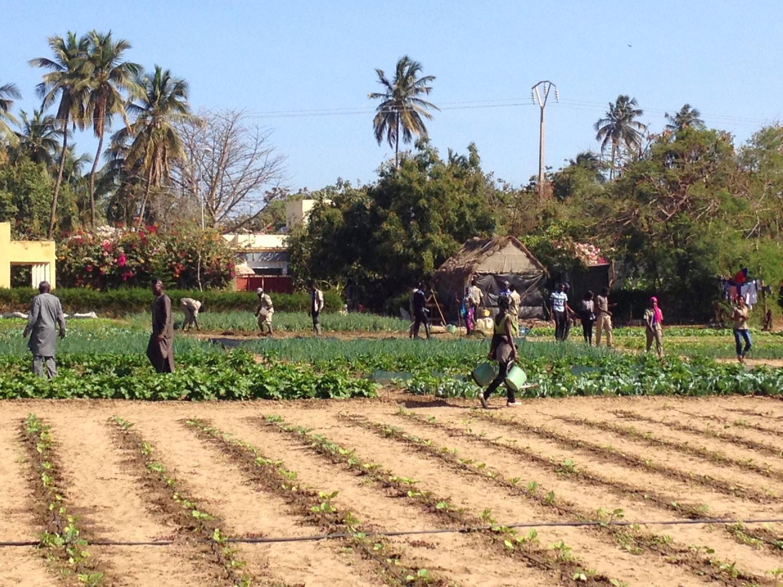 The impressive school garden at CIPA.