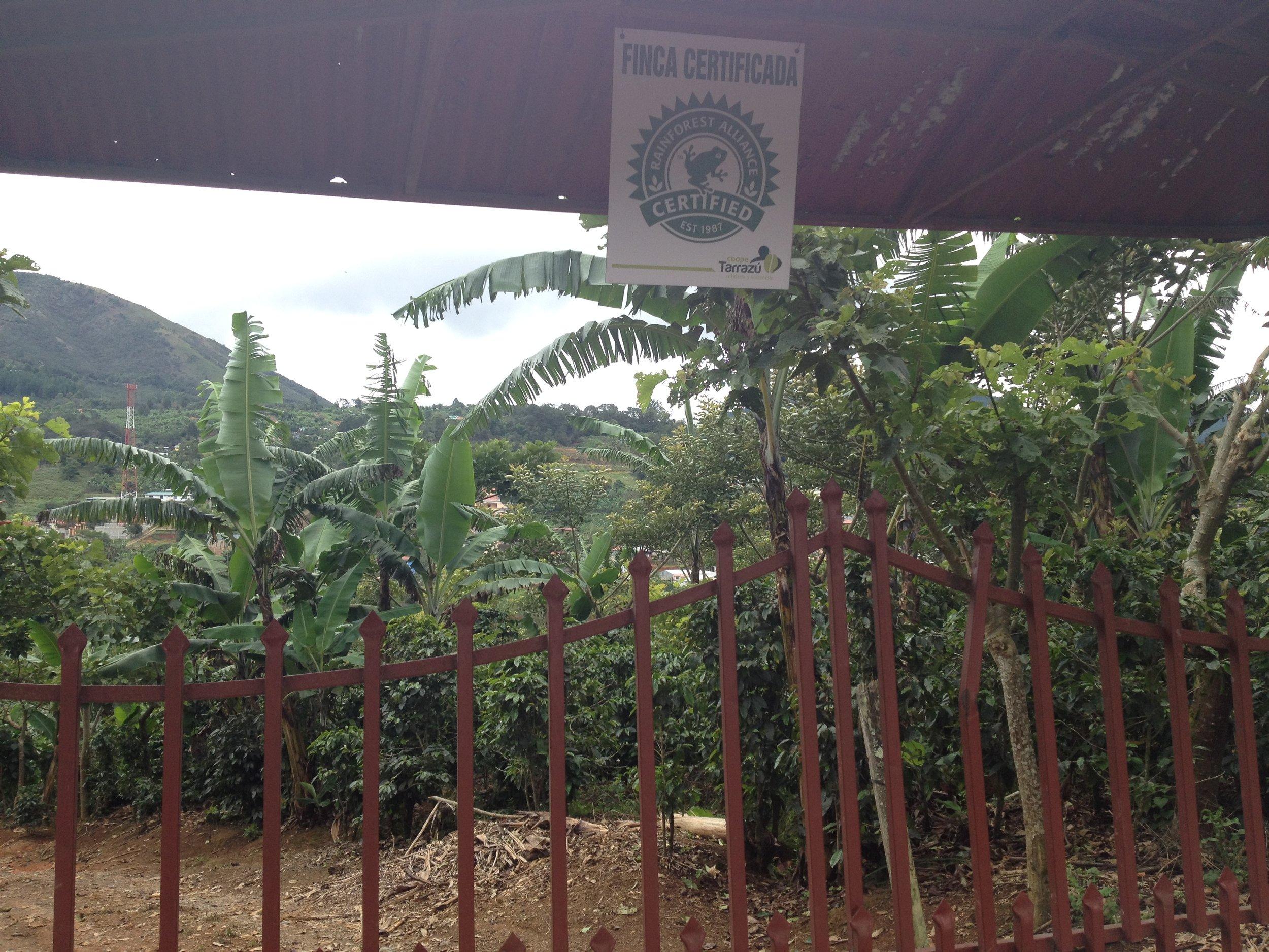 Rainforest Alliance farm