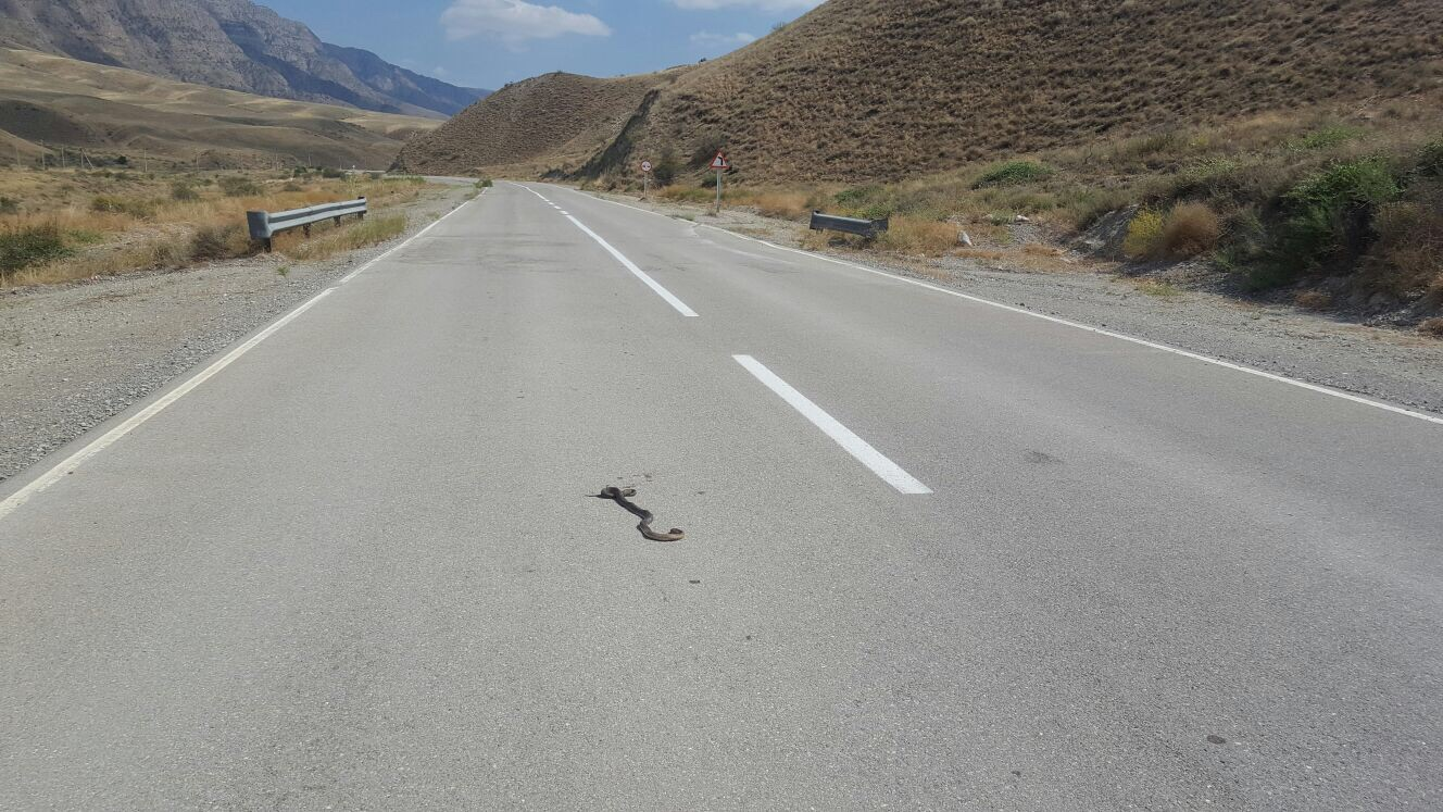 A snake relaxing in the middle of the road