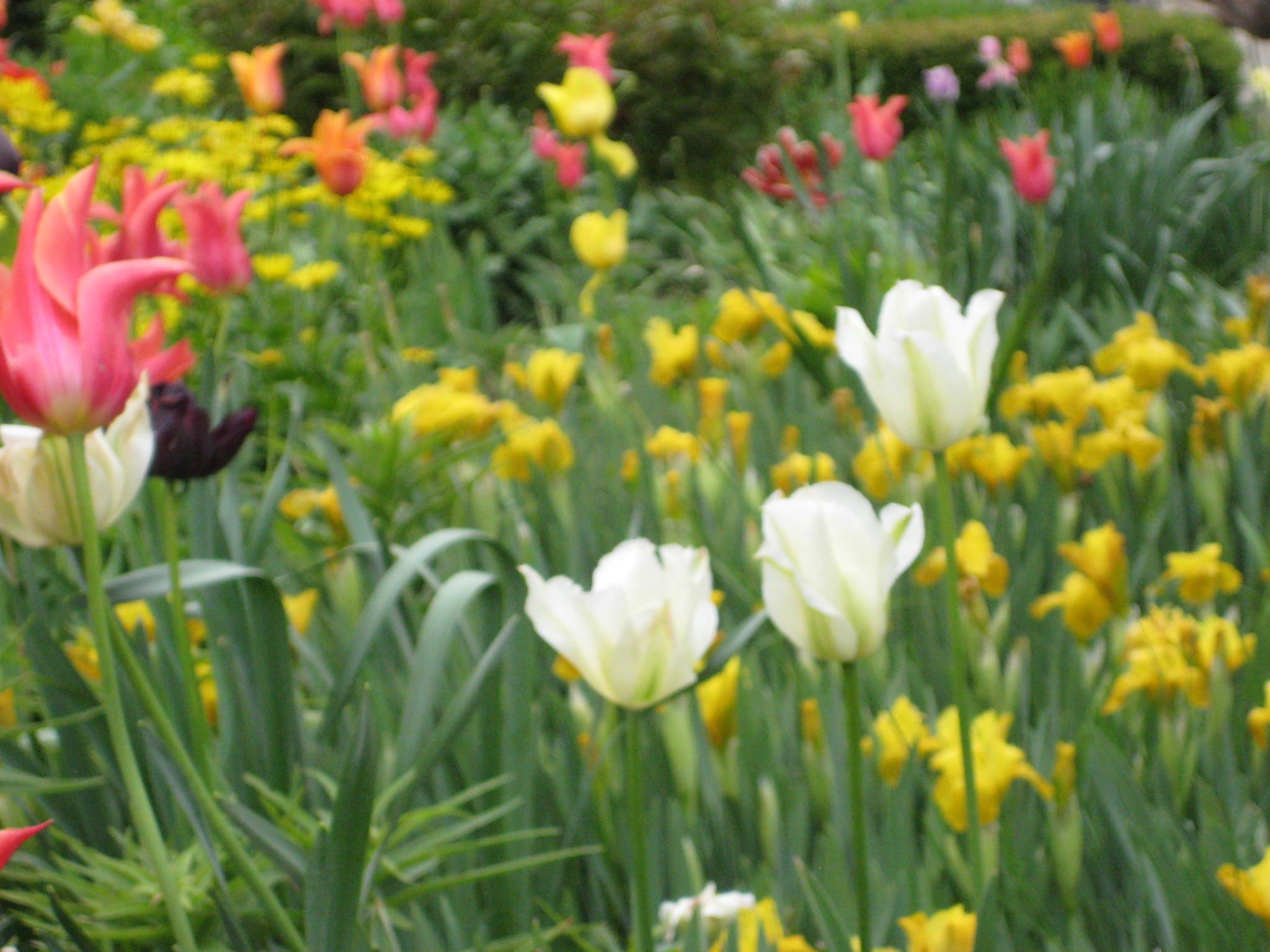 Tonny-Jackie-I-May-20102-125-Copy.jpg