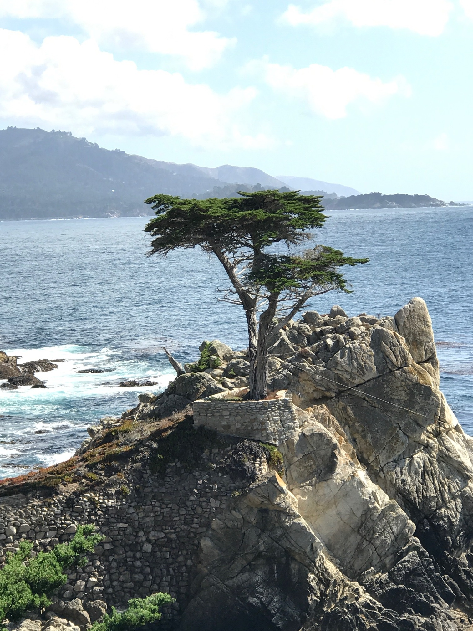 The Lone Cypress, Pebble Beach