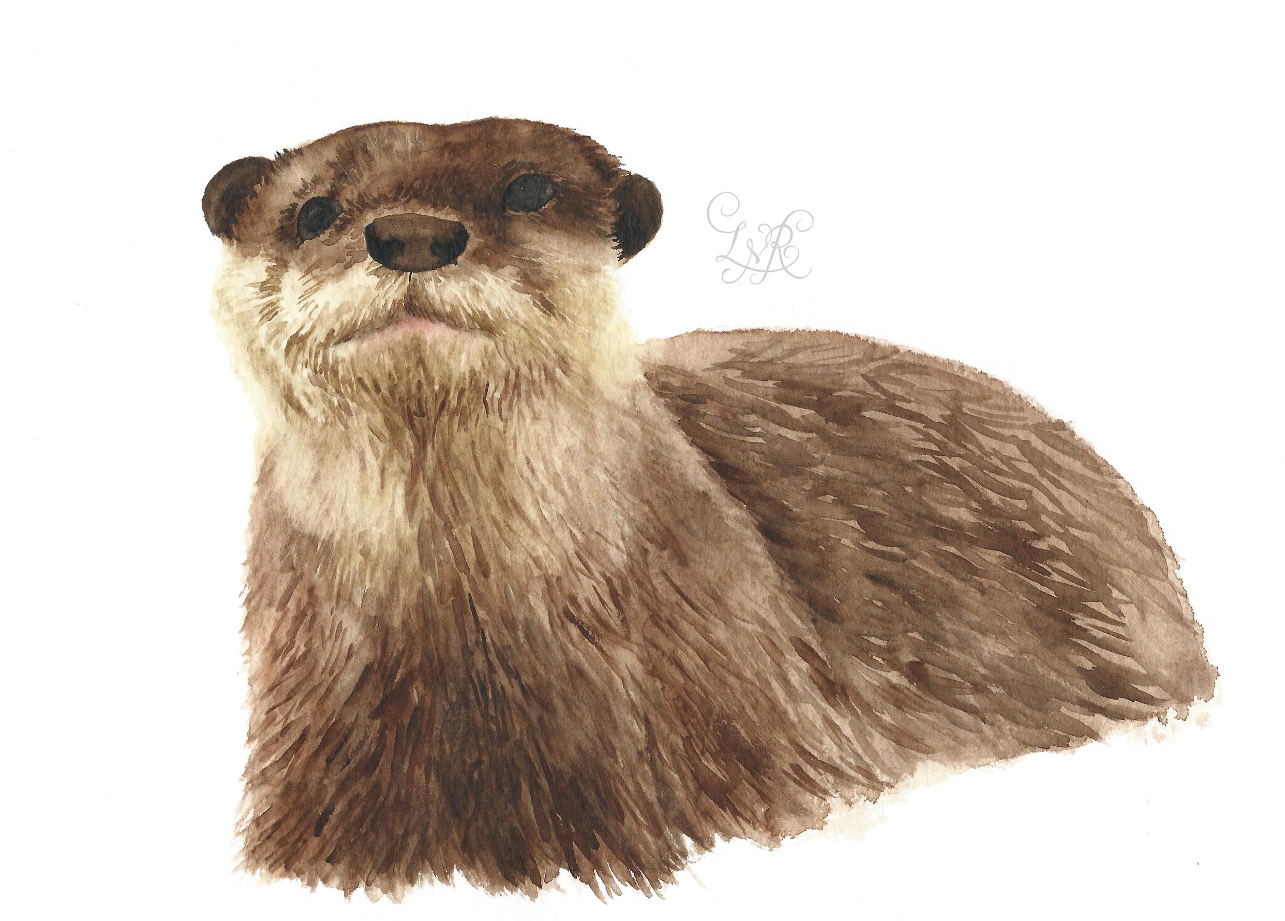 Otter Illustration copy.jpg