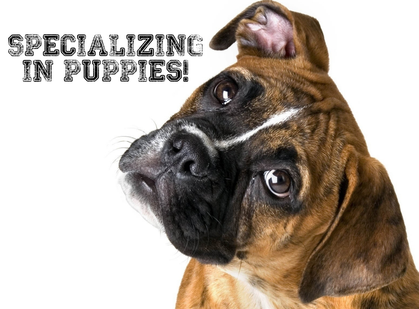 We specialize in puppes!